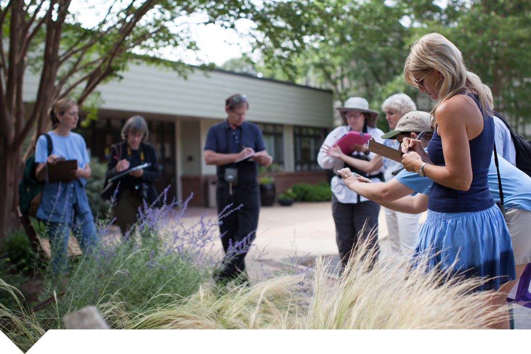 Students surrounding a garden taking notes and photographs