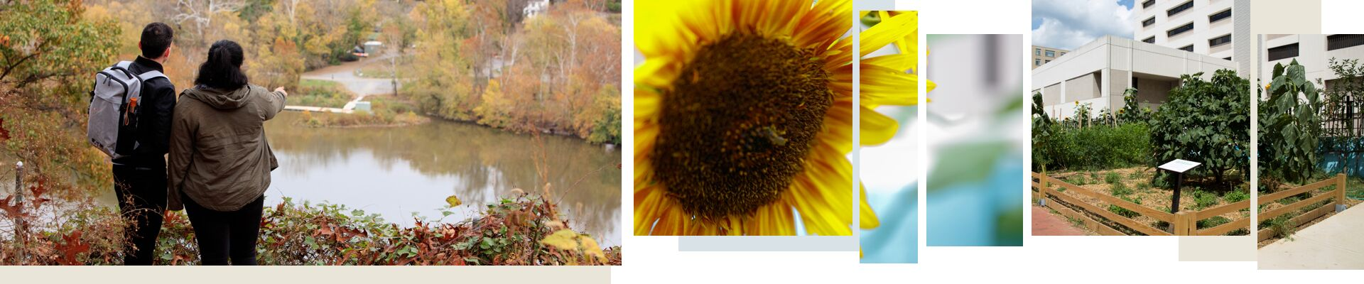 Students looking over river, a sunflower, a garden