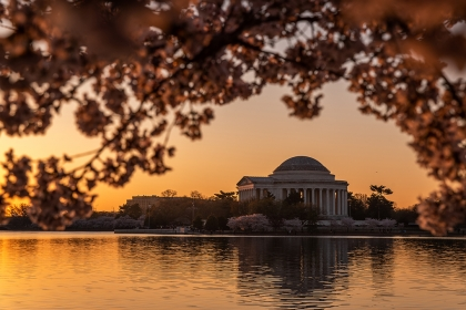 Cherry blossoms with Washington, DC skyline at sunset